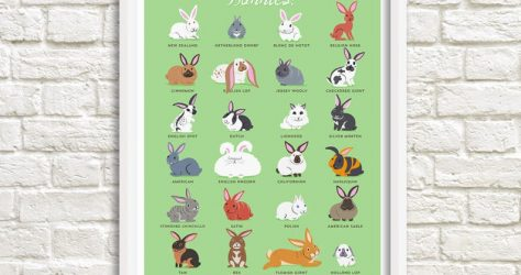 doggiedrawings – Bunnies art print